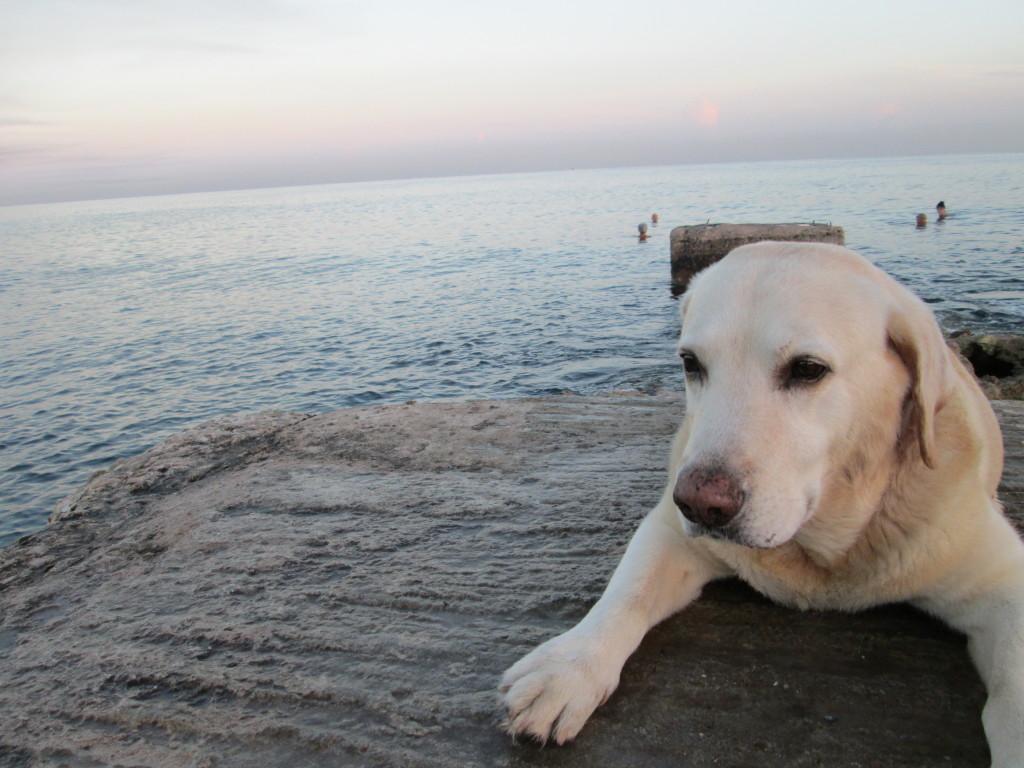 bartdog